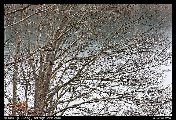 Bare branches, Sandwich. Cape Cod, Massachussets, USA (color)