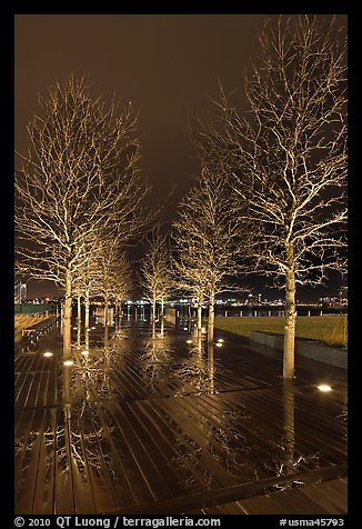 Illuminated trees and reflections. Boston, Massachussets, USA (color)