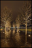 Illuminated trees and reflections. Boston, Massachussets, USA ( color)
