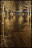 Reflected trees at night. Boston, Massachussets, USA (color)