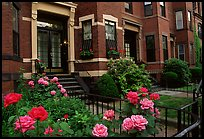 Roses and brick houses on Beacon Hill. Boston, Massachussets, USA