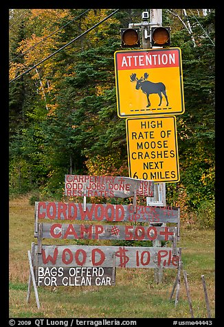 Moose warning a wood for sale signs. Maine, USA