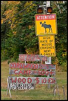 Moose warning a wood for sale signs. Maine, USA ( color)