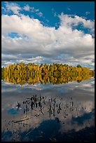 Reeds, autumn reflections, and cloud, Greenville Junction. Maine, USA
