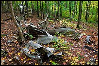 B-52 wreck scattered in autum forest. Maine, USA