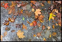 Detail of B-52 airplane part with fallen leaves. Maine, USA (color)