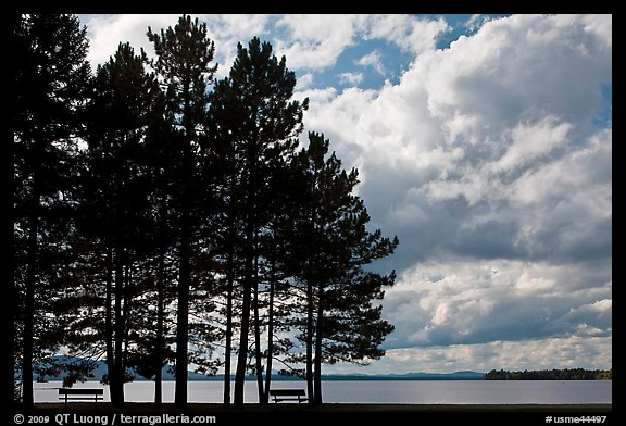 Conifers silhouette and clouds, Lily Bay State Park. Maine, USA (color)