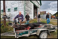 Hunters preparing to weight killed moose, Kokadjo. Maine, USA