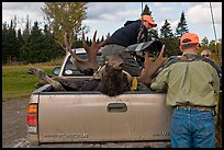 Hunters and tagged moose in back of truck, Kokadjo. Maine, USA