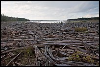 Dead trees on the shore of Chesunkunk Lake. Maine, USA ( color)