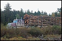 Truck loaded with tree logs. Maine, USA (color)