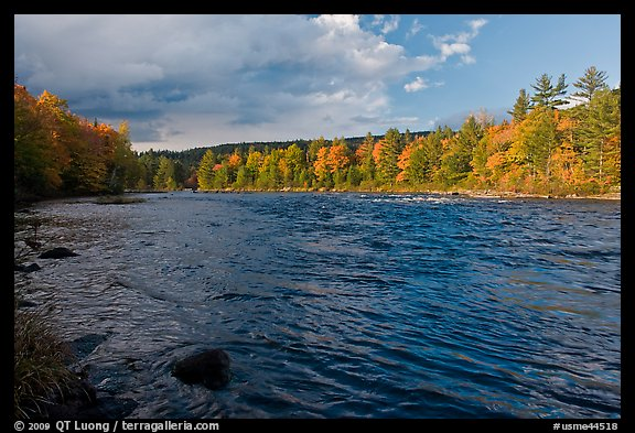 Fast-flowing Penobscot River and fall foliage. Maine, USA (color)