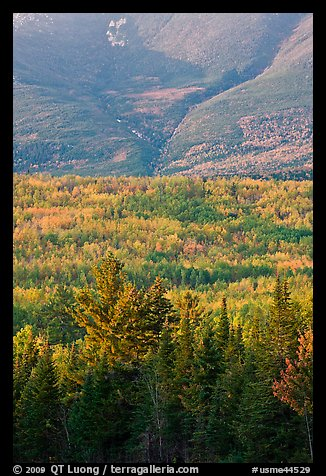 Forested slopes of Mount Katahdin. Baxter State Park, Maine, USA (color)