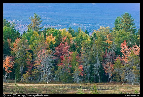 Trees in fall foliage and Katahdin slopes. Maine, USA (color)
