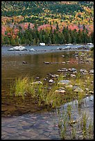 Reeds and mountain slope, Sandy Stream Pond. Baxter State Park, Maine, USA ( color)
