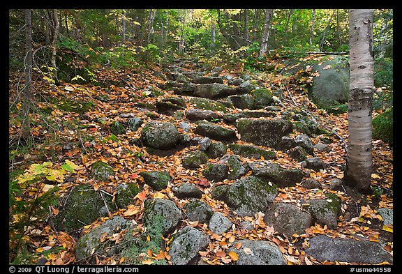 Trail ascending in forest over stones. Baxter State Park, Maine, USA