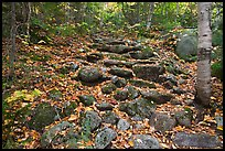 Trail ascending in forest over stones. Baxter State Park, Maine, USA ( color)