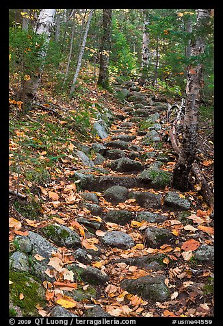 Steep trail paved irregularly with stones. Baxter State Park, Maine, USA (color)