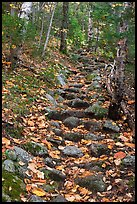 Steep trail paved irregularly with stones. Baxter State Park, Maine, USA
