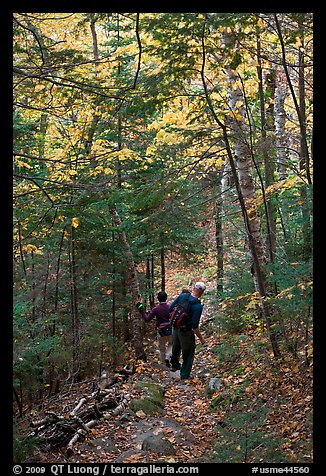 Hikers descend steep trail in forest. Baxter State Park, Maine, USA