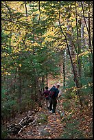 Hikers descend steep trail in forest. Baxter State Park, Maine, USA (color)