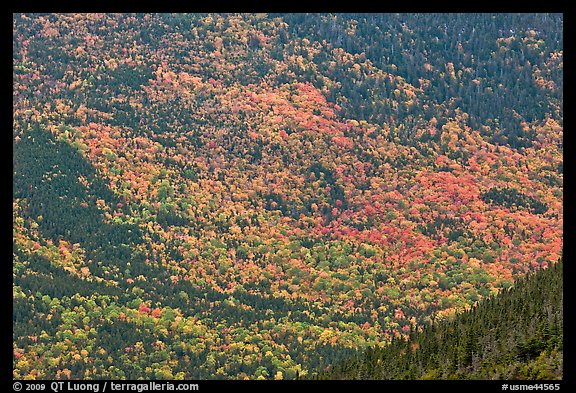Katahdin mountain slopes colored with fall foliage. Baxter State Park, Maine, USA (color)