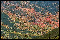 Katahdin mountain slopes colored with fall foliage. Baxter State Park, Maine, USA
