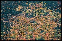 Floatplane flying against slope with trees in fall foliage. Baxter State Park, Maine, USA