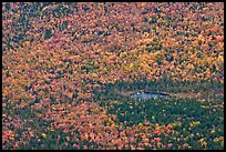 Aerial view of pond and trees in fall foliage. Baxter State Park, Maine, USA