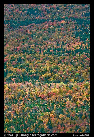 Aerial view of forest in autumn. Baxter State Park, Maine, USA (color)