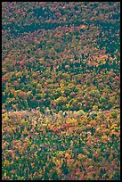 Aerial view of forest in autumn. Baxter State Park, Maine, USA