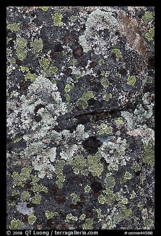 Lichen-covered rocks. Baxter State Park, Maine, USA (color)