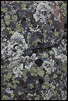 Lichen-covered rocks. Baxter State Park, Maine, USA ( color)
