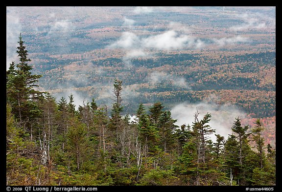 Ridge of conifers, with mixed forest and clouds below. Baxter State Park, Maine, USA (color)
