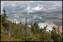 Ridge of conifers, with mixed forest and clouds below. Baxter State Park, Maine, USA ( color)