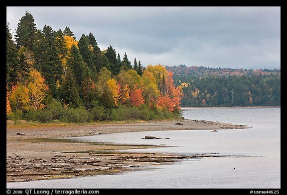 Trees in autumn color on shores of Chamberlain Lake. Allagash Wilderness Waterway, Maine, USA (color)