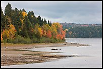 Trees in autumn color on shores of Chamberlain Lake. Allagash Wilderness Waterway, Maine, USA