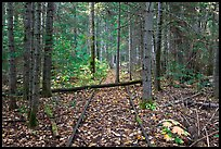 Abandonned railroad tracks in forest. Allagash Wilderness Waterway, Maine, USA