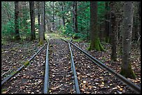 Forest with railroad tracks from bygone logging area. Allagash Wilderness Waterway, Maine, USA