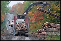 Log loader lifts trunks into log truck. Maine, USA