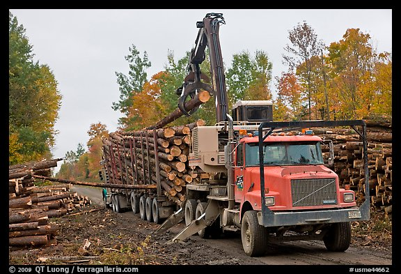 Logging truck loaded by log loader truck. Maine, USA