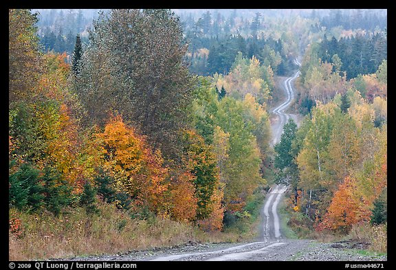 Dirt road through autumn forest. Maine, USA (color)