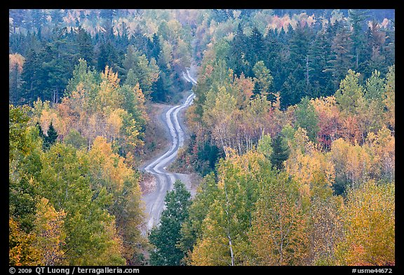 Northern forest in fall with narrow unimproved road. Maine, USA (color)