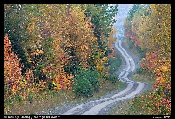Dirt road and curves in the fall. Maine, USA (color)