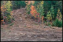 Clear cut gully in forest. Maine, USA