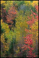 North woods forest color in autumn. Maine, USA