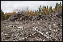 Deforested landscape in the fall. Maine, USA ( color)