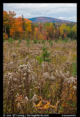 Clearing, forest in fall foliage, and hill. Maine, USA (color)