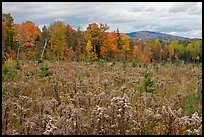 Clearing and forest in autumn. Maine, USA