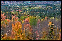 Septentrional woods in autumn. Maine, USA ( color)